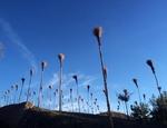 Anni Rapinosa nel Parco Nazionale del Pollino in Basilicata